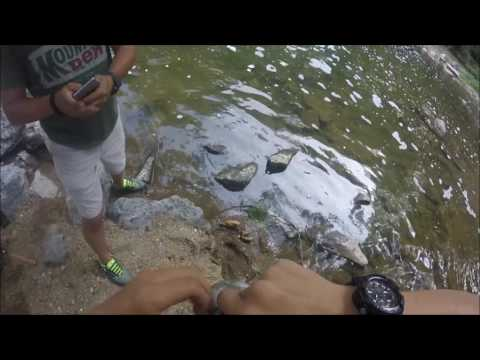 Multispecies Fishing In Mill Creek (Lancaster PA)