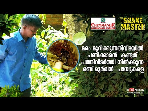 Worker who came to cut tree sees two Cobras |  Snakemaster | EP 419 | Kaumudy TV