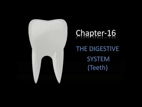 Human digestive system (TEETH)| part-3| (in hindi)