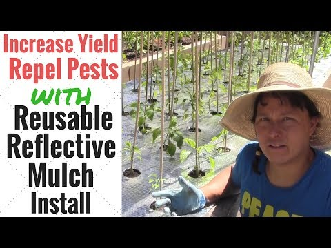 Increase Yields & Repel Garden Pests with Reusable Reflective Mulch Install