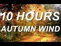 🍁 Autumn Wind - Relaxing Nature Sounds 10 Hours