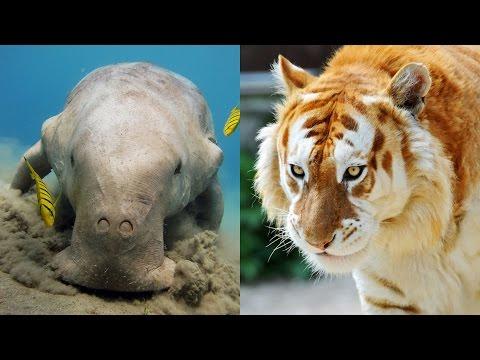١٠ حيوانات على وشك الإنقراض