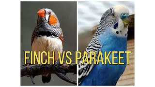 FINCHES OR PARAKEETS WHICH IS BETTER TO BUY