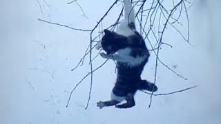 Коты дерутся за сало.котэ.кошачий бой 2019к ,лучшие приколы смотреть до конца, ржака,котики приколы
