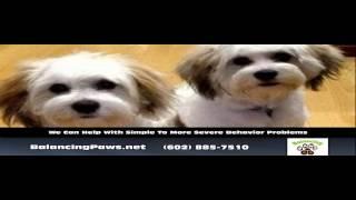 Dog Training Phoenix Phoenix Az - Balancing Paws