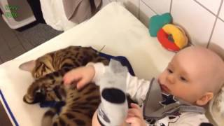 funny cat 2017 |  Cute Cats and Dogs Love Babies Compilation (2015)