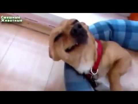 Как улыбаются собаки