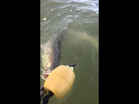 Capt Sally releases a July trophy trout in Baffin Bay
