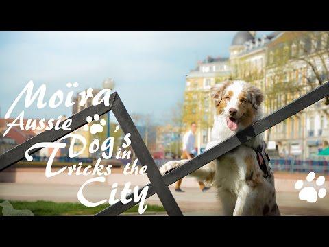 Moïra Aussie ~ Dog's tricks in the city !