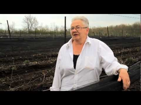 Ontario Grape Grower Debra Marshall is growing your wine nearby