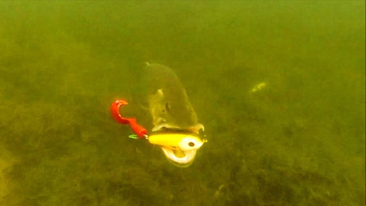 Pike attack wolf tail under water fish camera for Fishing lure camera
