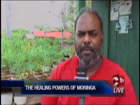 Moringa   The New Health Craze