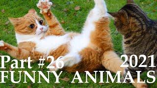 ПРИКОЛЫ С КОТАМИ И СОБАКАМИ 2021 FUNNY VIDEOS ANIMALS 2021 PART 26