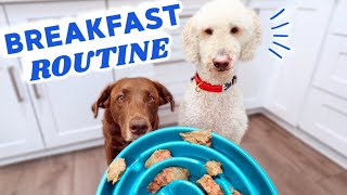 What Feeding My Dogs Looks Like  (REAL LIFE ROUTINE)
