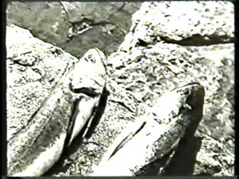 Los jóvenes viejos - Rodolfo Kuhn - Película completa - 1962