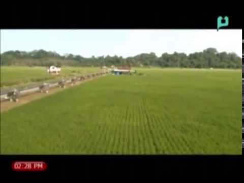 Balitang ASEAN: Padi-Farming Project sa  Brunei, malaki ang magiging ambag sa kanilang bansa