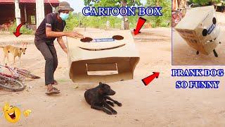 Dog Pranks By Cartoon Box   The FULL Prank   The Best Cartoon Box Prank Dog  Hilarious Big Box Prank