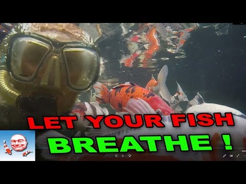 Let Your Fish Breathe!