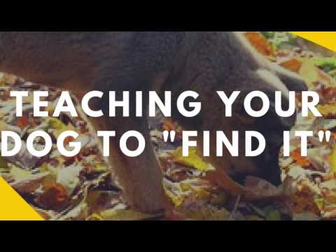 "Teaching Your Dog to ""Find It"""