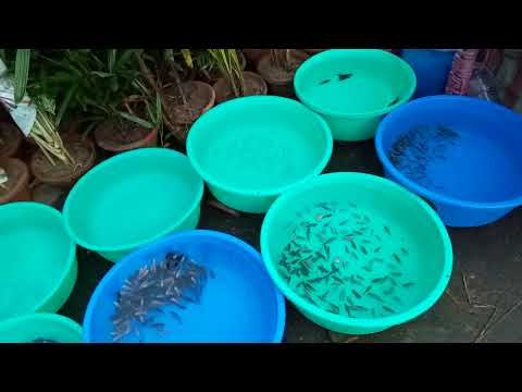 Galiff Street Kolkata :: early morning and sellers selling illegal marine fishes asking not to video