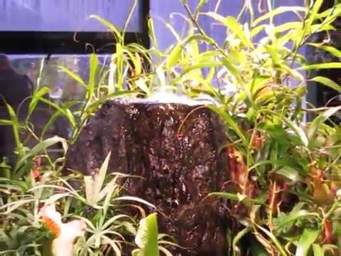 Плотоядные растения - YouTube