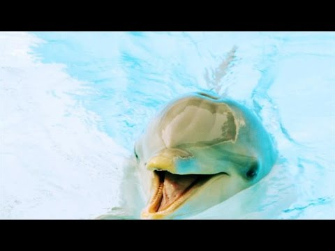 Is This Dolphin Speaking English?
