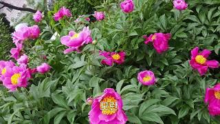 정원에 심는 꽃과 나무, 그리고 악세사리들