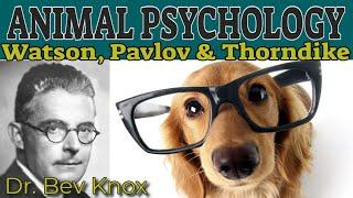 The Influence of Animal Psychology: Watson, Pavlov & Thorndike