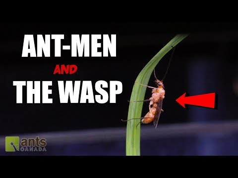 The Real Ant-Man and The Wasp (4K Video!)