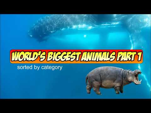 World's Largest Animals Part 1 - Mammals, Reptiles, and More!