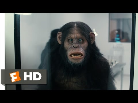 Scary Movie 5 2013  Rise of the Apes  69  Movies