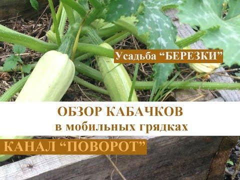 Знакомства в Городце - Нижегородская область
