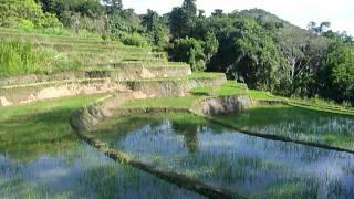 Sri Lanka,ශ්රී ලංකා,Ceylon,Beautiful Rice Paddy Terraces (10)