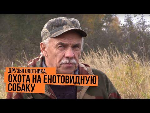 Охота на енотовидную собаку \ Друзья охотника