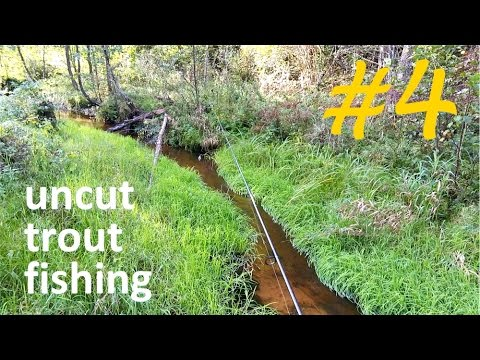 Small stream autumn trout with a spinning. Uncut Fishing #4