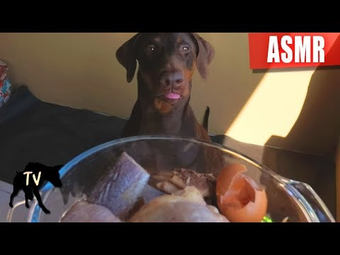 Doberman eating Raw Meat and Fish ASMR & Mukbang