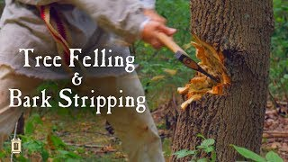 How to Fell a Tree in the 18th Century (A Close Call!)
