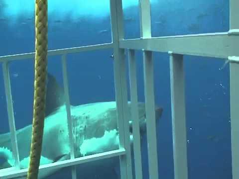atlantic Man Eater geo Ocean Giant Shark