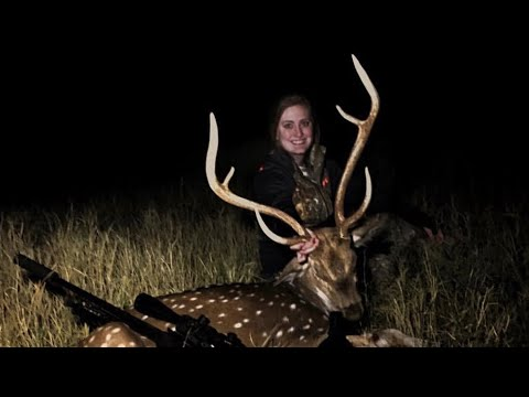 Hunting Axis & Whitetail   Coleman County, Texas