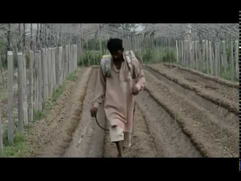 Tunnel Farming (Documentary)