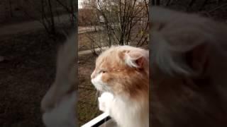 Кошка дышит свежим воздухом