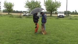 Le Coup Du Parapluie Avec Hera