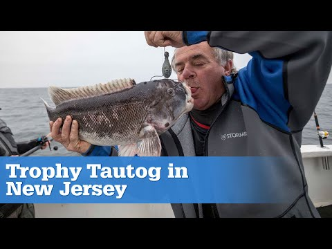 Trophy Tautog In New Jersey S15 | E01