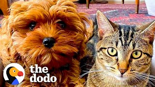 Kitten Refuses to Share Her New Puppy Sister with Anyone   The Dodo Odd Couples