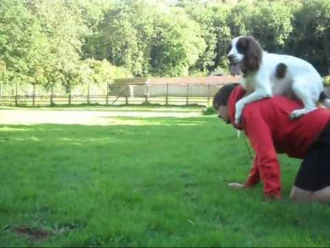 The Amazing  Magic Trick Dog - SuperDog