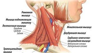 Немеют руки? Что делать?Лестничные мышцы!(, 2016-02-17T15:52:05.000Z)