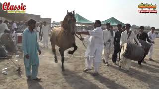 76/Best Horse Dance Punjab Meerik Sial Jhang 2018/ Bani Syed Qalandar Sultan