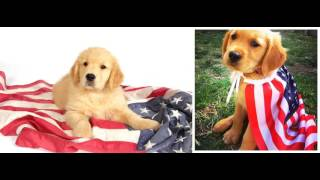 Patriotic Dogs with American Flag Familiar Nostalgic Tune