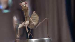 Las PELÍCULAS de terror Mantis | Extraterrestres Cogido En la Cinta (Asesino, Agresión, Ataque)