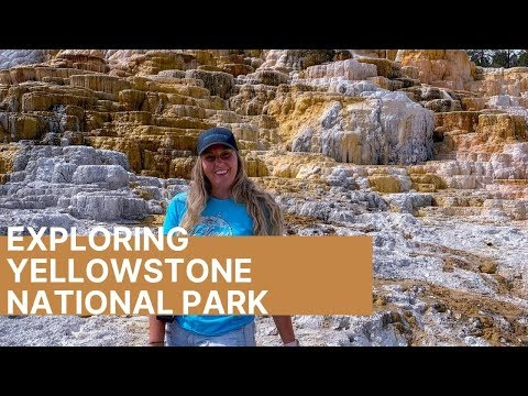 Exploring Yellowstone National Park ll 2000lbs Bison Swimming & Gray Wolf Sighting!